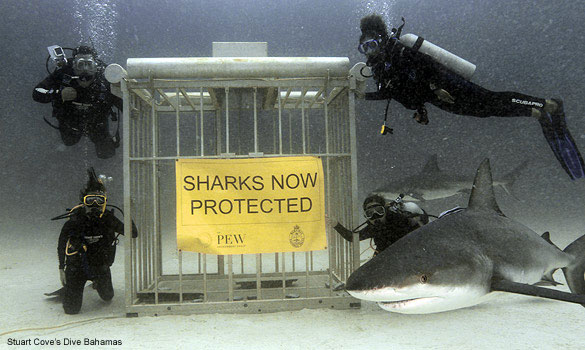 SHARKS-PROTECTED