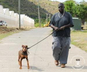 PHOTO - AGRICULTURE ENCOURAGES INCREASED DOG OWNER AWARENESS